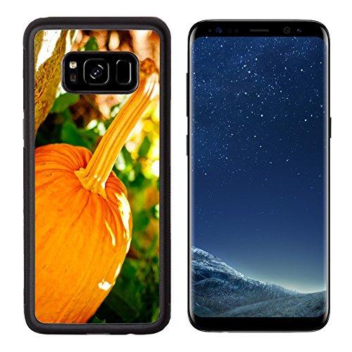 MSD Premium Samsung Galaxy S8 Aluminum Backplate Bumper Snap Case IMAGE ID: 31497132 Seasonal pumpkin background Agriculture halloween food (Mac Fields Halloween)