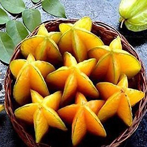Bluelans 50Pcs Thai Star Fruit Seeds Juicy Carambola Exotic Tree Seeds