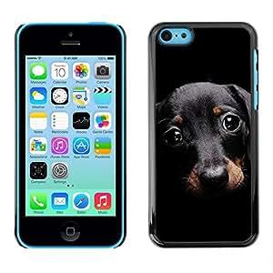 PC/Aluminum Funda Carcasa protectora para Apple Iphone 5C Dachshund Doxie Small Pet Dog Cute / JUSTGO PHONE PROTECTOR