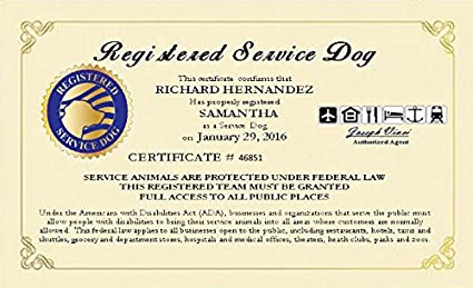 amazon com registered service dog certificate customized with