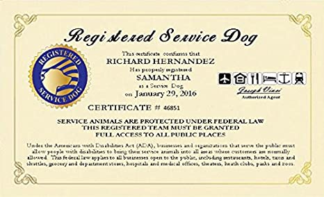 picture relating to Printable Ada Service Dog Card titled Registered Company Pet Certification - Custom-made with your popularity, your puppies reputation and certificate amount and day. No cost reproduction reproduction and registration