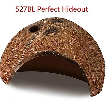 527BL - Casco de Coco Natural ecológico para Acuario de Coco Natural con Bonitos Agujeros para Mascotas, Ideal para la cría de Cuevas y Nido: Amazon.es: ...