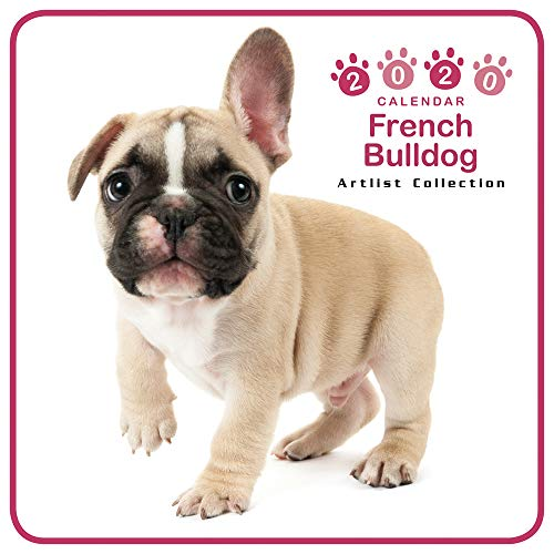 The Dog Mini Wall Calendar 2020 French Bulldog (Images Of Cutest Puppies In The World)