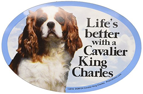Prismatix Decal Cat and Dog Magnets, Cavalier King Charles - King Cavalier Magnet Charles