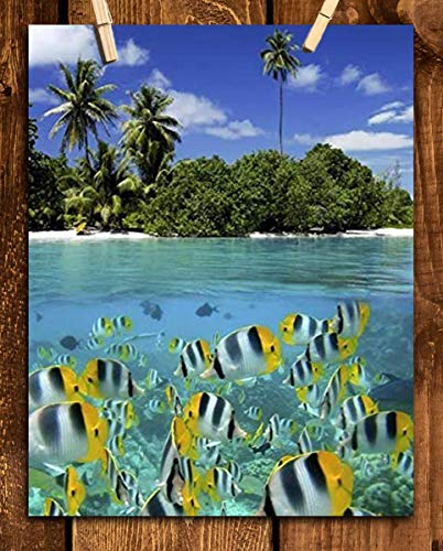 Tropical Island Snorkeling Fish- 8 x 10 Prints Wall Art. Perfect for Home Decor, Office Decor or Children's Bedroom Decor. Perfect Gift for the Tropical Fishy Folks and Aquarium Lovers.
