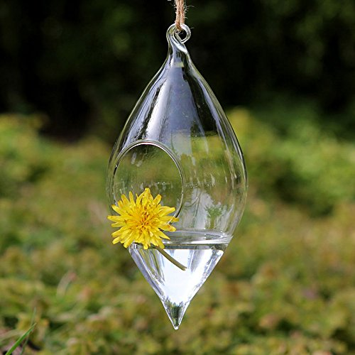 Pack Of 2 Hanging Terrarium Glass Vase Flower Air Plant