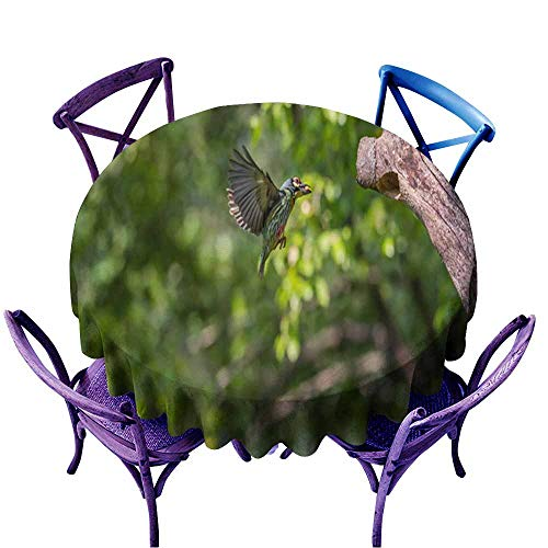 Acelik Washable Round Tablecloth,Bird (Coppersmith Barbet) Flying Feeding Baby Bird,Stain Resistant, Washable,63 INCH]()