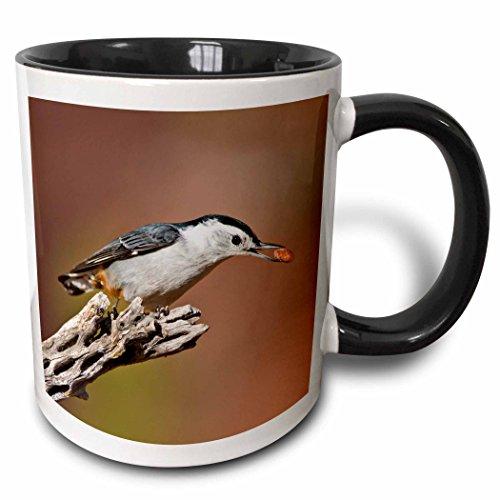 3dRose Danita Delimont - Larry Ditto - Birds - White-breasted Nuthatch, Sitta carolinensis, with seed, Texas, USA - 15oz Two-Tone Black Mug (mug_191300_9) ()