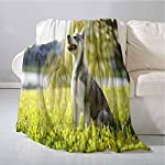 Homrkey Alaskan Malamute Super Soft Warm Throw Blanket Klee Kai Puppy Sitting on Grass Looking Up Friendly Young Cute Animal Easy to Carry Blanket 60 x 90 Inch Multicolor 6