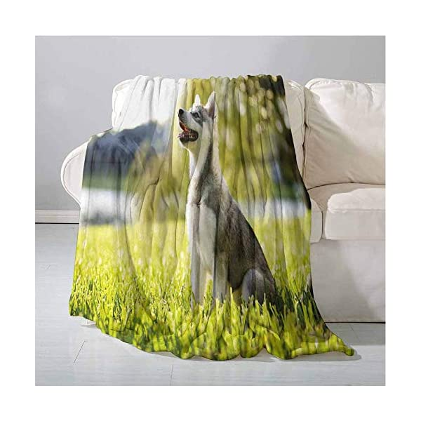 Homrkey Alaskan Malamute Super Soft Warm Throw Blanket Klee Kai Puppy Sitting on Grass Looking Up Friendly Young Cute Animal Easy to Carry Blanket 60 x 90 Inch Multicolor 2