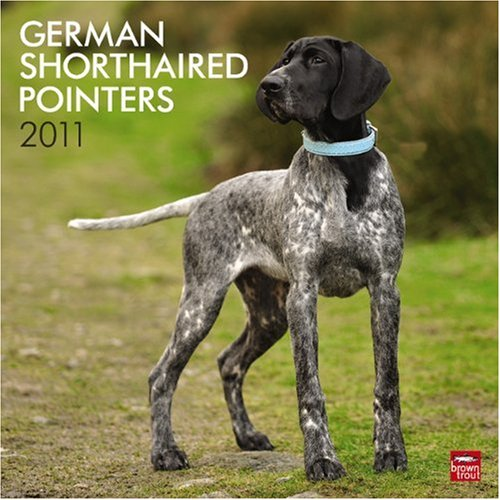 Pointer 2010 Calendar (German Shorthaired Pointers 2011 Square 12X12)