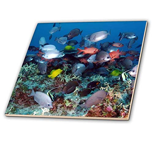 3dRose Tropical Coral Reef Fish - Ceramic Tile, 6-inch (ct_44933_2)