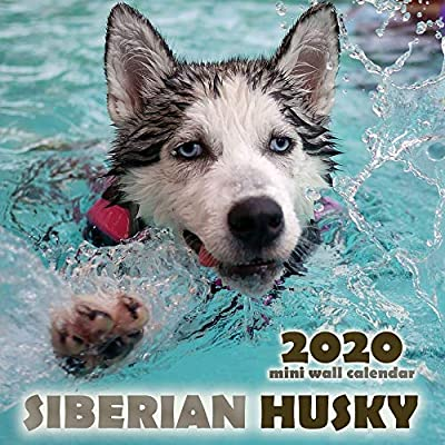 The-Siberian-Husky-2020-Mini-Wall-Calendar