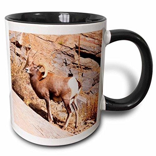 - 3dRose Danita Delimont - Wildlife - Rocky mountain Bighorn sheep, Ram, wildlife - US06 PWO0019 - PiperAnne Worcester - 15oz Two-Tone Black Mug (mug_143172_9)