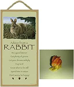 Animal rabbit power Power Animals