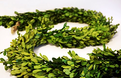 Garland Fresh (Preserved Boxwood Garland 6 ft. long by Tradingsmith)