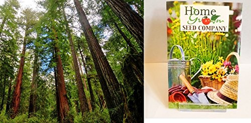 homegrown-packet-giant-sequoia-seeds-80-seeds-sequoia-gigantea-tree