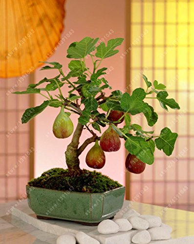 Highest Rated Fruit Plants