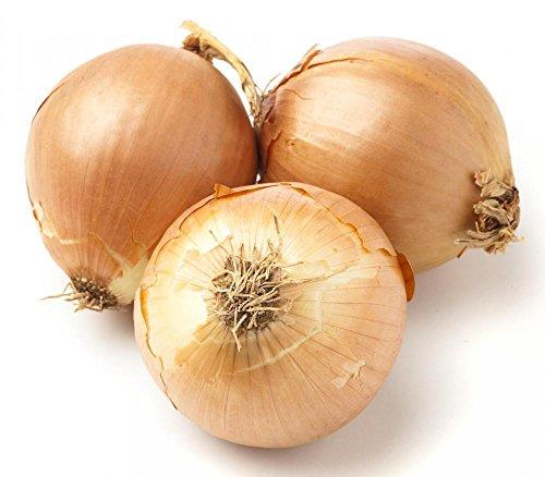 Plantree Más de 15 semillas: 15+ - Más de 1000 semillas de Candy Hybrid Onion (tratadas) - Muy buen almacenamiento