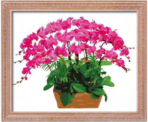 Spray Phalaenopsis (Diy oil painting, paint by number kit- Phalaenopsis 1620 inch.)