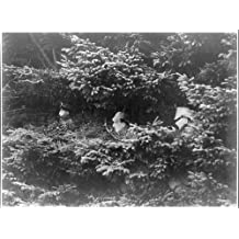 Photo: Camouflaged German lookouts in the Argonne Forest. France,WWI,1914-1918
