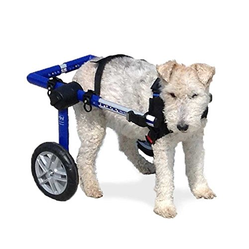 Walkin' Wheels Dog Wheelchair - for Medium Dogs 26-49 lbs - Veterinarian Approved - Wheelchair for Back Legs