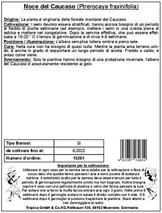 TROPICA - Pterocaria del Cáucaso (Ptrerocaya fraxinifolia) - 15 ...