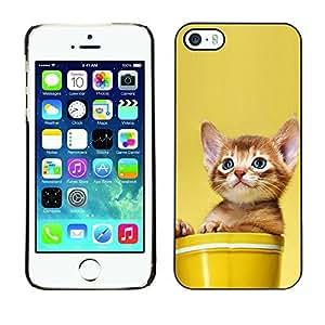 YOYO Slim PC / Aluminium Case Cover Armor Shell Portection //Cute Cat Kitten In A Pot //Apple Iphone 5 / 5S