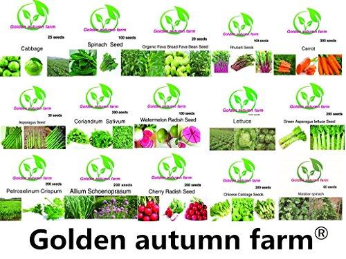 15+ Seeds (Golden autumn farm-New season Organic vegetable seeds set of 15)