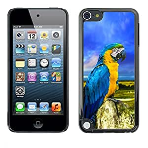 Design for Girls Plastic Cover Case FOR Apple iPod Touch 5 Parrot Colorful Blue Feathers Summer OBBA