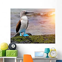 Blue Footed Booby Galapagos Wall Mural by Wallmonkeys Peel and Stick Graphic (60 in W x 47 in H) WM360247