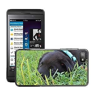 Super Stella Slim PC Hard Case Cover Skin Armor Shell Protection // M00144699 Puppy Black Labrador Cute Pet // BlackBerry Z10
