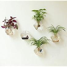 NewDreamWorld's Set of 5 hexagon wall plant terrariums//wall fish bowl //indoor wall planters//green plants wall vase//wall art decorate (5 small)