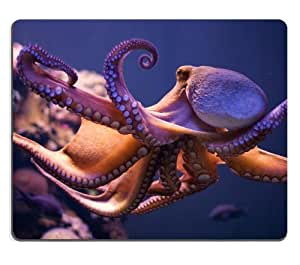 Octopus Devilfish Fish Octopi Marine Mouse Pads Customized Made to Order Support Ready 9 7/8 Inch (250mm) X 7 7/8 Inch (200mm) X 1/16 Inch (2mm) High Quality Eco Friendly Cloth with Neoprene Rubber Luxlady Mouse Pad Desktop Mousepad Laptop Mousepads Comfortable Computer Mouse Mat Cute Gaming Mouse pad