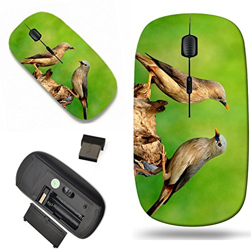 279 Tea - Luxlady Wireless Mouse Travel 2.4G Wireless Mice with USB Receiver, 1000 DPI for notebook, pc, laptop, macdesign IMAGE ID: 26559087 Sweet Pair of Chestnut tailed Starling birds Sturnus malabaricus tea