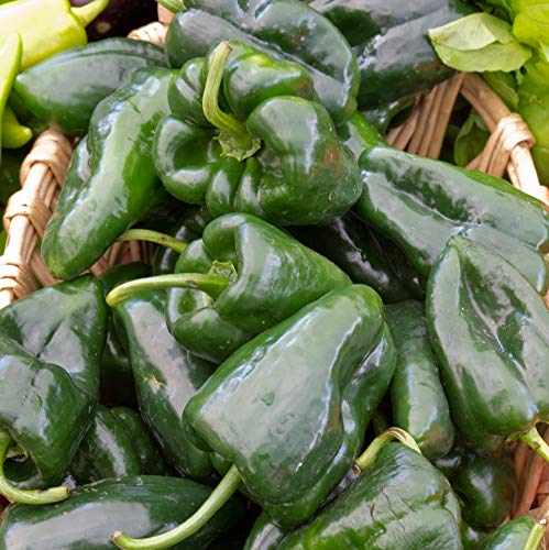 Sweet Yards Seed Co. Organic Poblano Pepper Seeds - Over 25 Open Pollinated Non-GMO Seeds