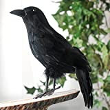 Black Feathered Large Halloween 13'' Artificial Crow; Very Realistic Looking!
