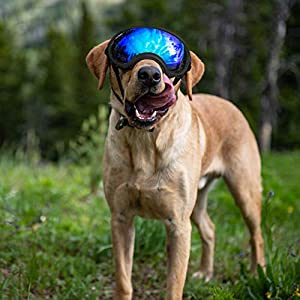 Rex Specs Dog Goggles - Eye Protection for The Active Dog 14