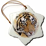 3dRose Royal Bengal Tiger, Ranthambhor National Park, India Snowflake Ornament, 3''