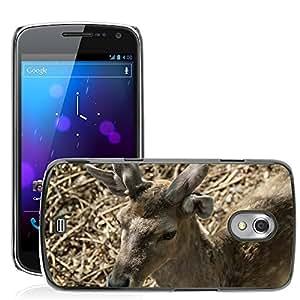 Etui Housse Coque de Protection Cover Rigide pour // M00134960 Gamo macho Animal Animal World // Samsung Galaxy Nexus GT-i9250 i9250