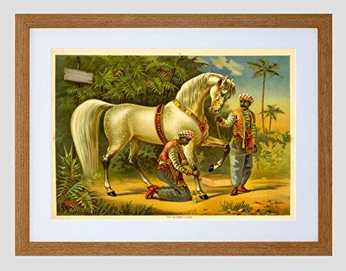 Arabian Horse Paintings - Paintings Sultan Steed Horse Arabian Black Framed Art Print Picture B12X9938