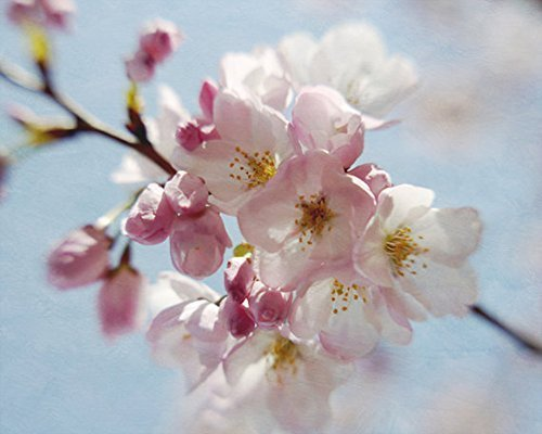 Cherry Blossom Photography, Sakura Artwork, Floral Art Print, Pastel Pink Blue Baby Girl Nursery Bedroom Decor, Spring Nature Wall Picture by Natural Photography Spa (Image #2)