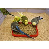 MONEY SAVING Bird Food/Feed, Healthy, Suitable For All Ages And All Type Of Birds - 1 kg