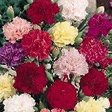 Outsidepride Carnation Chabaud Mix - 1000 Seeds