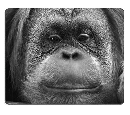 Msd Mousepad Orang Utan Monkey Portrait While Looking At Yuo Image 33721268 Customized Tablemats Stain Resistance Collector Kit Kitchen Table Top Deskdrink Customized Stain Resistance Co