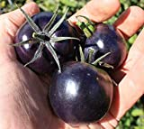 Seeds Rare Tomato American Blue Medium Vegetable Organic Heirloom Ukraine