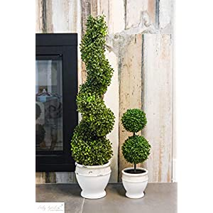 Admired by Nature Aritificial Boxwood 10