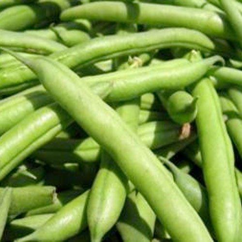"130 Seeds, Bush Bean""Blue Lake 274"" (Phaseolus vulgaris) Seeds By Seed Needs"