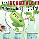 """The Incredible Nature's Greeting Bean Plant that sprouts with the message of """"Happy New Year"""" Engraved on the beautiful plant's central bean!!! Open...Water... Watch Your Greeting Grow!!! Powered by the Patent Magic Plant Company"""