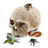 AROGEAR Skeleton Skull For Aquarium Decoration Reptiles House Cavern Home Daily Decoration (Skeleton Skull)